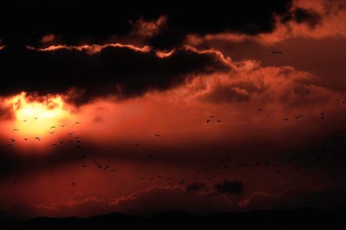 雲のすきまから~マガン~